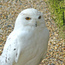 <b>hedwige</b> - le 17/11/2013 &agrave; 20:43