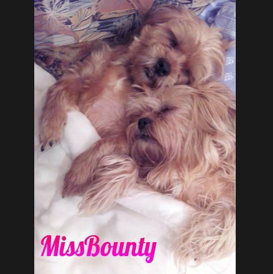 MissBounty