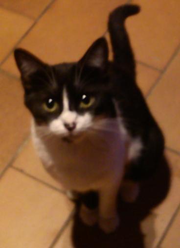 kitty83