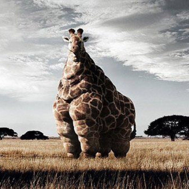Giraphovore