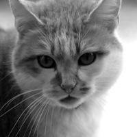 Catswoman