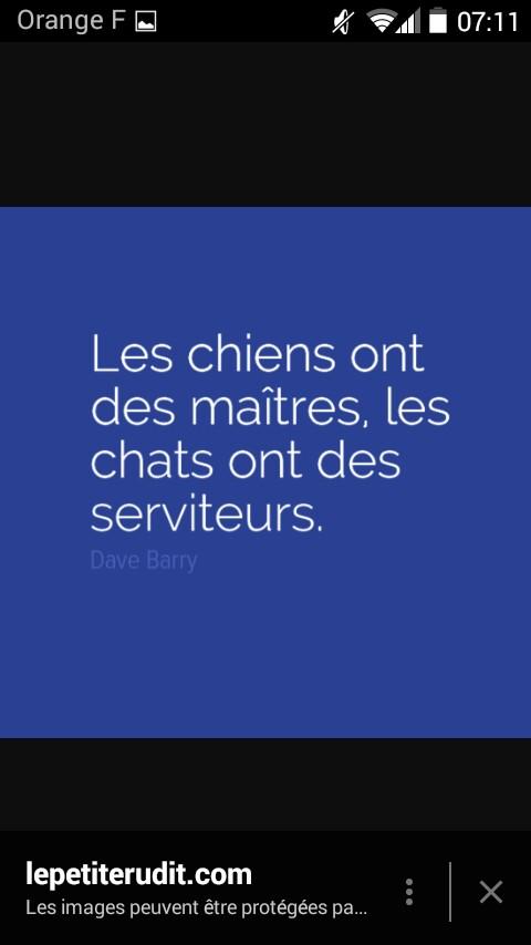 LaChatteNoire