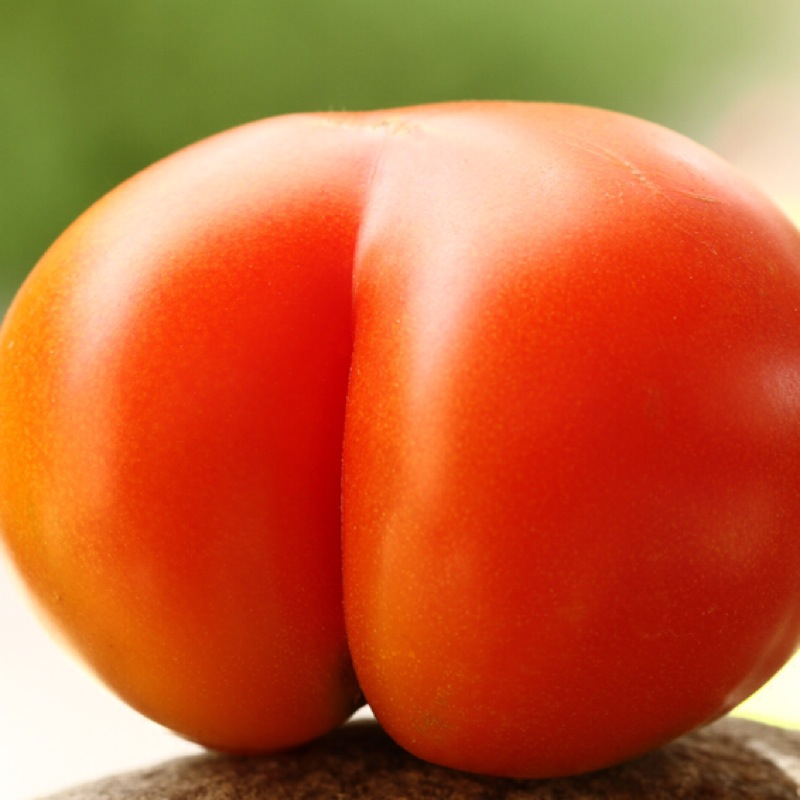 Tomate_rouge