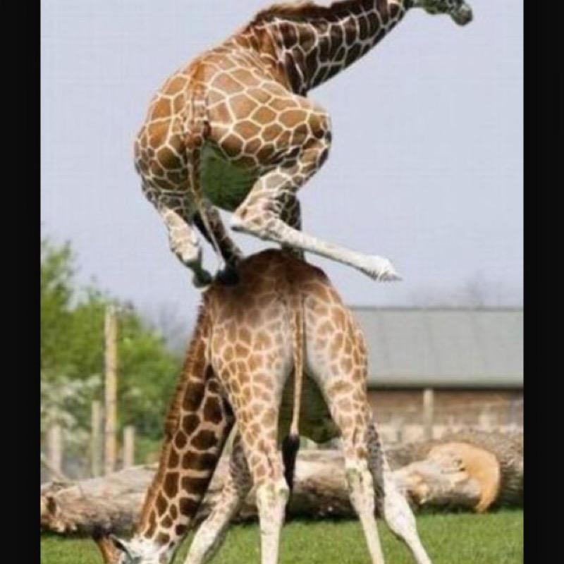 Super_Girafe