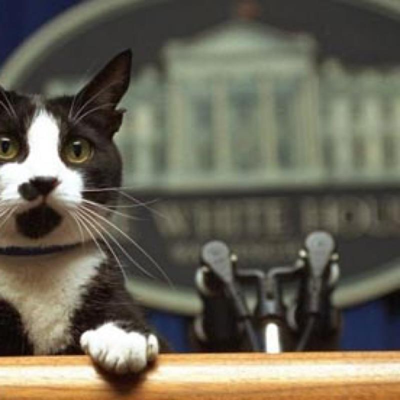 CatPresident