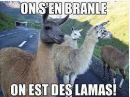 le_lamasticot