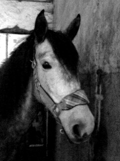 ilovehorses