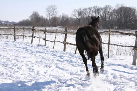 lovethehorse